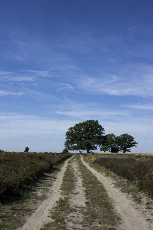 Lüneburger Heide (10)